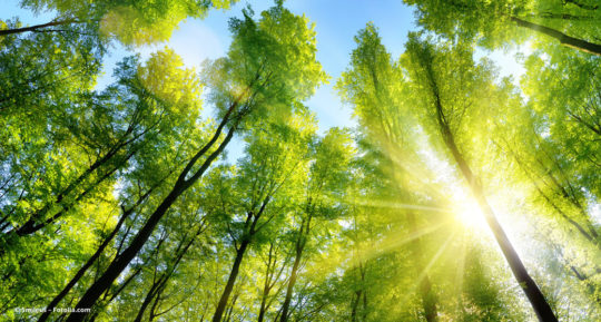 Wald mit grünen Baumkronen © Smileus – Fotolia.com