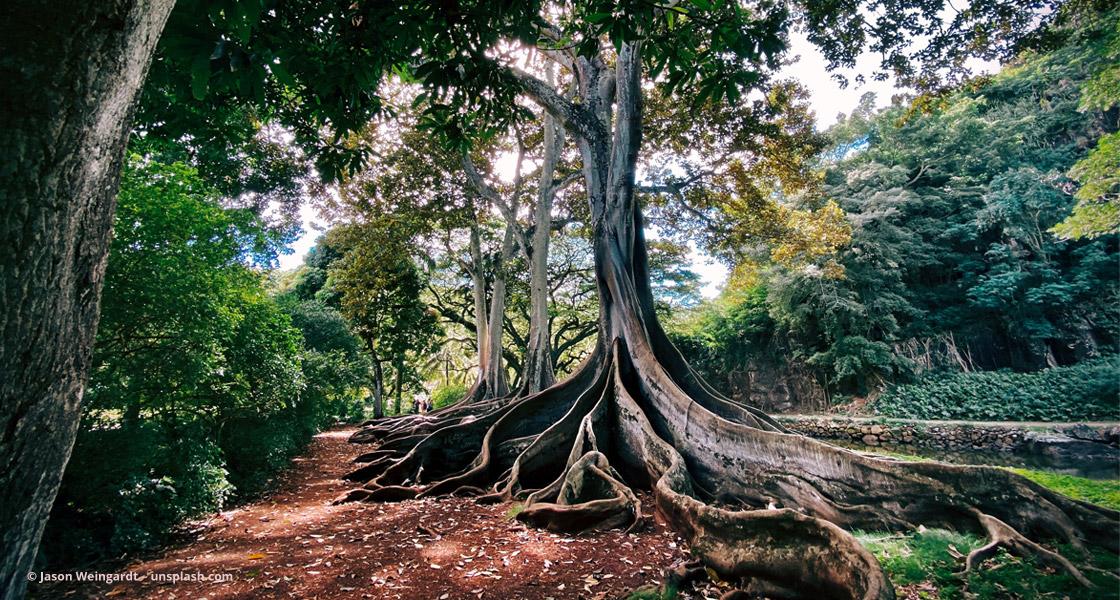 Baum mit großen Wurzeln © Jason Weingardt – unsplash.com