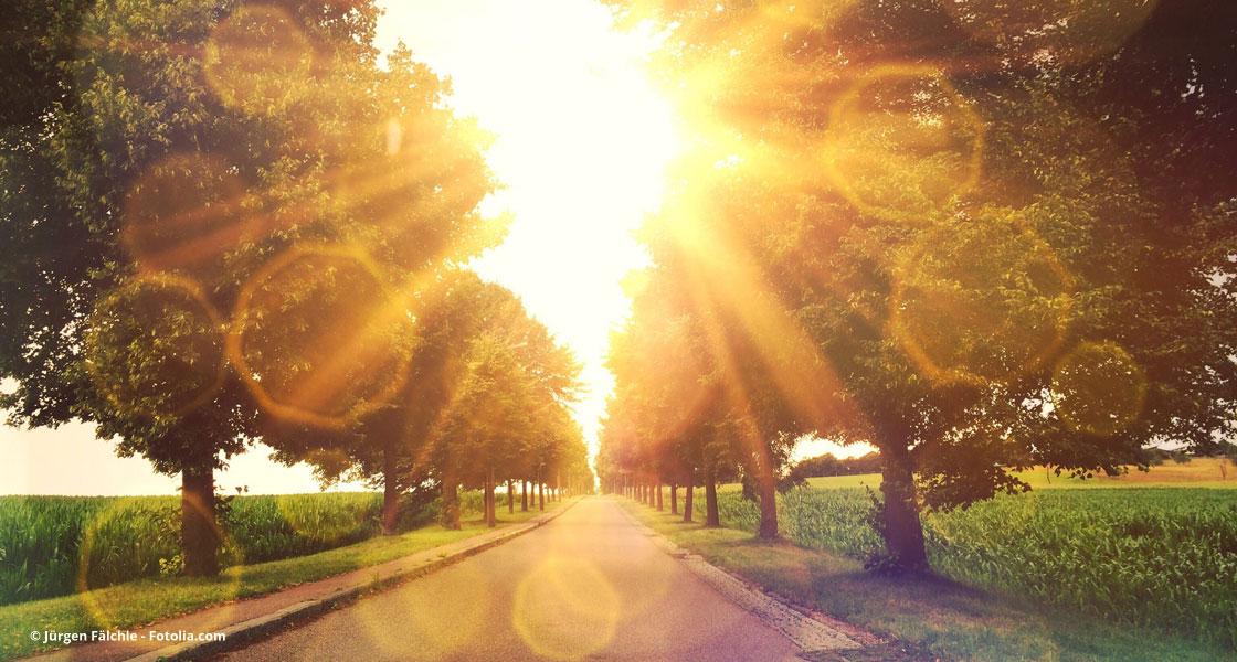 Sonnenstrahlen über einen Baumallee